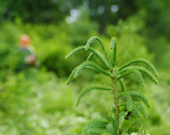 Plant dégagé