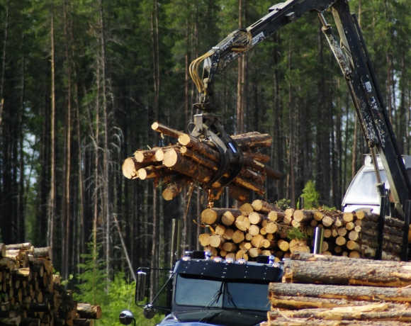 Bois sortant de la forêt