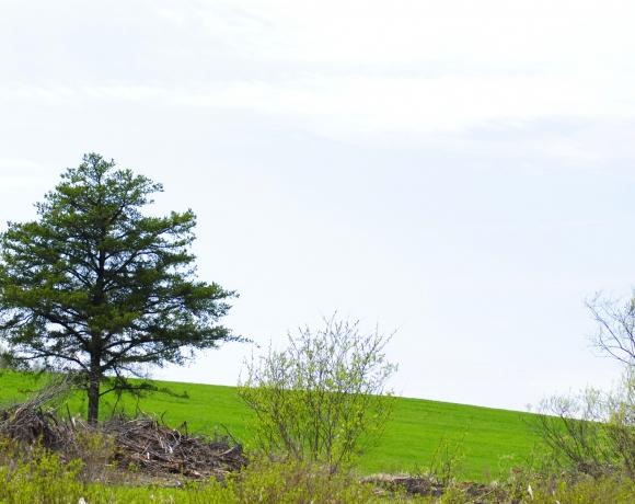 Vue depuis bloc de plantation