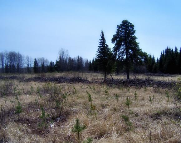 Plantation libre de broussailles