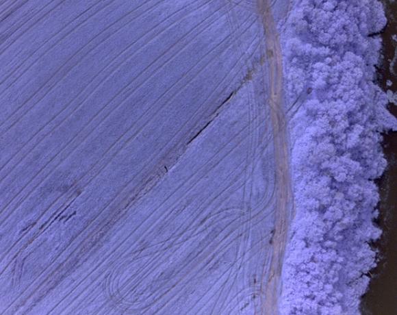 photo du drone avec filtre, résolution 3 cm, caméra NIR